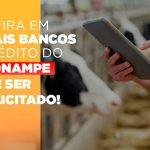 confira-em-quais-bancos-o-credito-pronampe-ja-pode-ser-solicitado - Confira em quais bancos o crédito do Pronampe já pode ser solicitado!